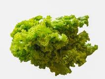 Салат на белой предпосылке, изолят стоковые фотографии rf