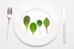 салат плиты листьев Стоковая Фотография