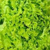 салат предпосылки Стоковые Фотографии RF