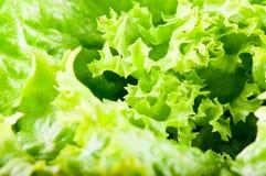 салат салата листьев Стоковое Изображение
