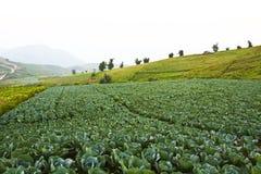 салат фермы Стоковые Фотографии RF