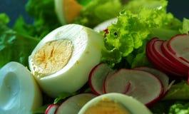 салат южный стоковые фотографии rf