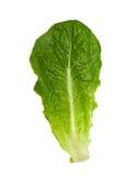 салат romaine листьев стоковая фотография rf