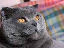 сало кота Стоковая Фотография