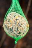 сало птицы шарика Стоковое фото RF