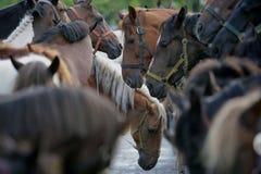 самая большая торговля лошади европы справедливая западная Стоковые Фотографии RF