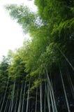 Самая высокорослая трава в мире Стоковое Изображение RF