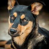 Самая лучшая друг-собака стоковые фотографии rf
