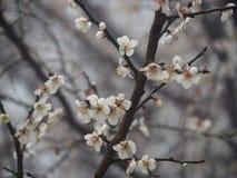Самая лучшая весна Стоковые Изображения