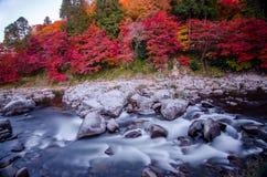 Самая лучшая осень в Японии Стоковая Фотография