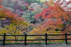 Самая лучшая осень в Японии Стоковое Изображение