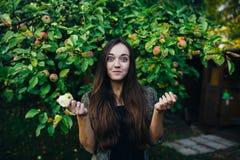 Самодельные яблоки в саде лета стоковая фотография rf