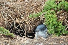 Самое небольшое pinguin стоковые изображения rf