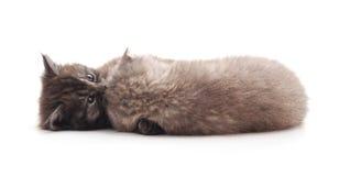 Самое теплое объятие от котенка 2 Стоковые Изображения RF