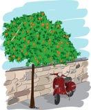 Самокат около оранжевого дерева, иллюстрация вектора Стоковая Фотография