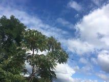 Самолет летает между деревьями Стоковое Изображение RF