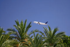 самолет над пальмами Стоковая Фотография RF