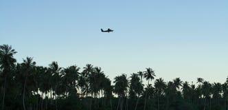 самолет над пальмами стоковые фото