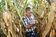 Самомоднейшее agricuture Стоковые Фотографии RF