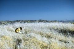 Самостоятельно в поле Стоковые Фото