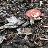 Самоцвет в лесе Стоковые Изображения RF