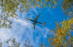 Самолет под деревьями Стоковая Фотография