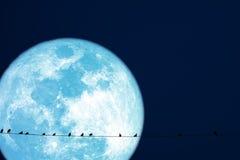 самца оленя луны планеты птицы силуэта назад на линии силы электрической стоковые фотографии rf