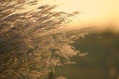 Самые интересные лета стоковое изображение