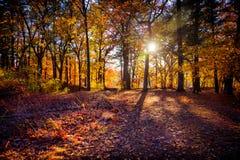 Самые интересные захода солнца осени в древесинах Стоковые Фотографии RF