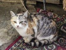 Самые красивые глаза кота, близко глаза изображений кота, различных и первоначально кота Стоковая Фотография RF