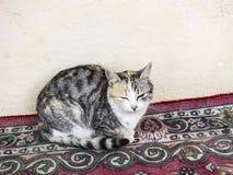 Самые красивые глаза кота, близко глаза изображений кота, различных и первоначально кота Стоковое Изображение