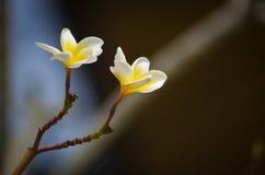 Самые красивые цветки Стоковые Изображения RF