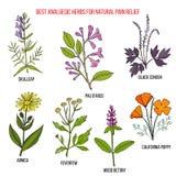 Самые лучшие противоболевые естественные травы для облегчения боли иллюстрация вектора