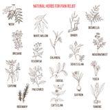 Самые лучшие естественные травы для облегчения боли иллюстрация штока