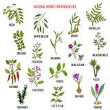 Самые лучшие естественные травы для облегчения боли иллюстрация вектора