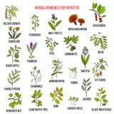 Самые лучшие травяные выходы для гепатита Стоковые Фотографии RF
