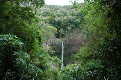 Водопад в тропической пуще Стоковые Изображения