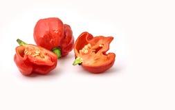Самый горячий перец Стоковое фото RF