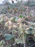 Самый малый кактус Стоковые Изображения