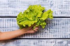Самый свежий салат Стоковые Изображения