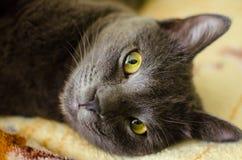 Самый умный кот Стоковые Фото