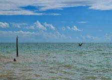 Самый южный пункт Флориды и Соединенных Штатов в Атлантическом океане с заплыванием персоны и птицами воды стоковое изображение rf