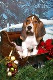 сани рождества basset Стоковое Фото