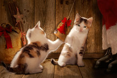Санта Клаус играя с котами, Стоковая Фотография RF
