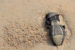 Сандалия внешней стороны на песке Вещи после прилива Стоковое фото RF
