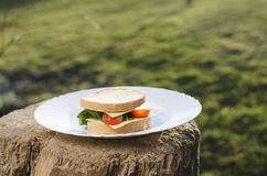 Сандвич на плите и зеленой предпосылке Стоковые Изображения RF