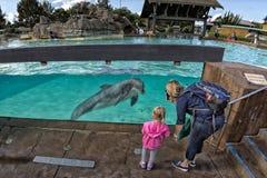 САН-ДИЕГО, США - 15-ое ноября 2015 - мир выставки дельфина на море Стоковые Фотографии RF
