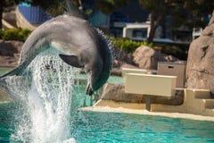 САН-ДИЕГО, США - 15-ое ноября 2015 - мир выставки дельфина на море Стоковое Изображение