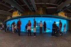 САН-ДИЕГО, США - 15-ое ноября 2015 - мир выставки дельфин-касатки на море Стоковое Изображение