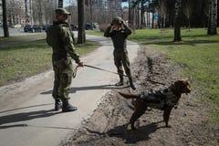 Саперы ратников с собаками обслуживания Стоковые Изображения RF